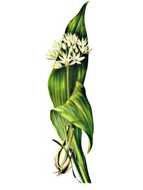 Yucca doline datovania